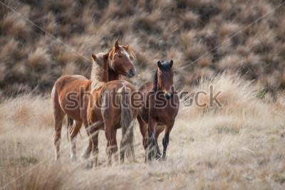 Image Kaimanawa chevaux sauvages avec des oreilles