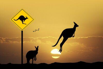 Image Kangaroo signe prudence
