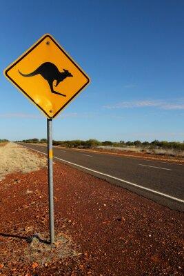 Image Kangourou Se connecter Australie du Sud