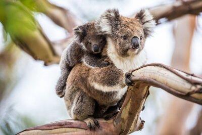 Image Koala