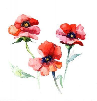 Image l'aquarelle fleurs de printemps de la peinture de pavot isolé sur le fond blanc