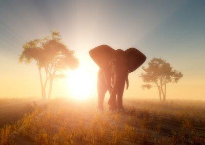 Image l'éléphant