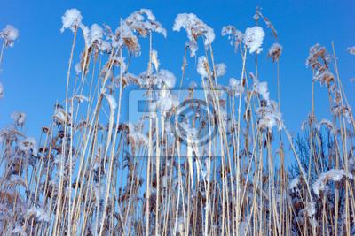 l'herbe et le ciel