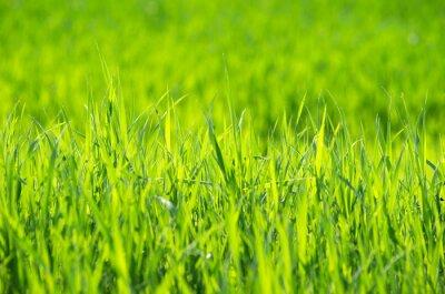 Image L'herbe verte