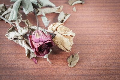 Image La dernière valentine s'est levée.
