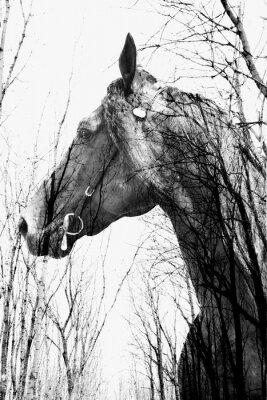 Image La forêt à l'intérieur du cheval ina art, multiexposition