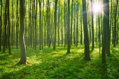 Image la forêt au printemps