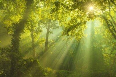 Image La forêt du Ciel