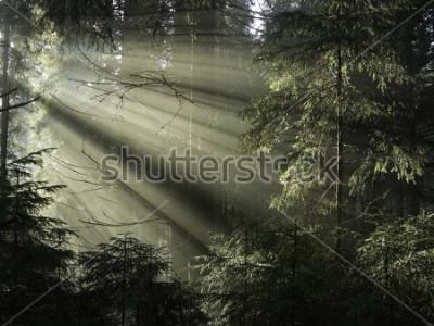 Image La lumière du soleil à travers les arbres