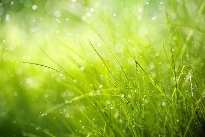 Image La rosée du matin sur herbe de printemps