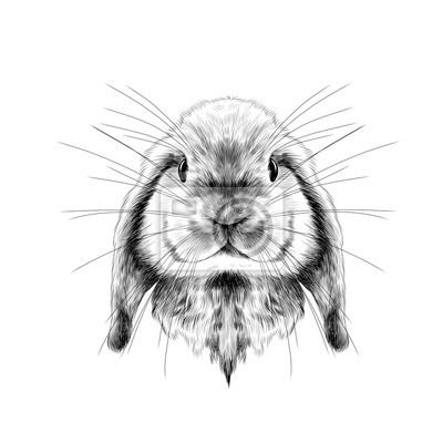 La Tete Du Lapin Pleine Face Symetrique Croquis Vecteur Graphique