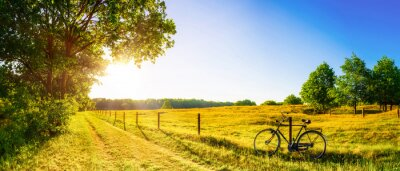 Image Landscape in summer with trees and meadows in bright sunshine