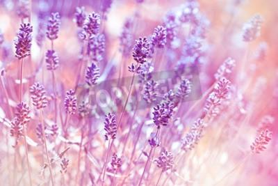 Image Lavande, fleurs, fleur, jardin