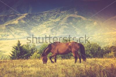 Image Les chevaux paissent contre les montagnes. Paysage d'automne. Image filtrée: effet vintage traité en croix.