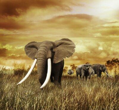Image Les éléphants au coucher du soleil