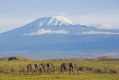 Image Les éléphants avec Kilimandjaro