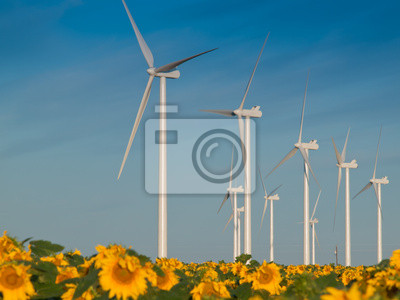 Les éoliennes et les tournesols