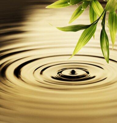 Image Les feuilles fraîches de bambou sur l'eau