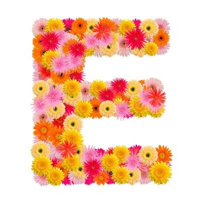 Image Lettre E alphabet avec gerbera isolé sur fond blanc