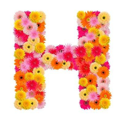 Image Lettre H alphabet avec gerbera isolé sur fond blanc