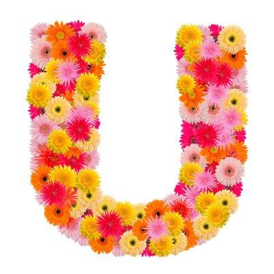 Image Lettre U alphabet avec gerbera isolé sur fond blanc