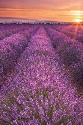Image Lever de soleil sur les champs de lavande en Provence, France