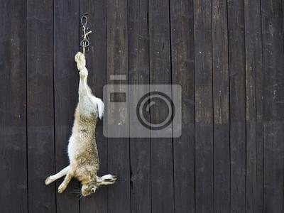 lièvre sauvage après la chasse
