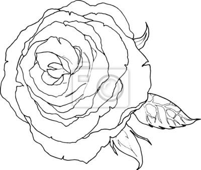 Ligne Dessin Dart Dune Fleur De Rose Peintures Murales Tableaux