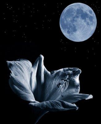 Image lilly et la lune