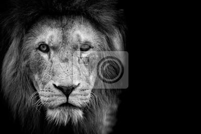 Lion noir et blanc peintures murales tableaux noir et - Photos de lions gratuites ...