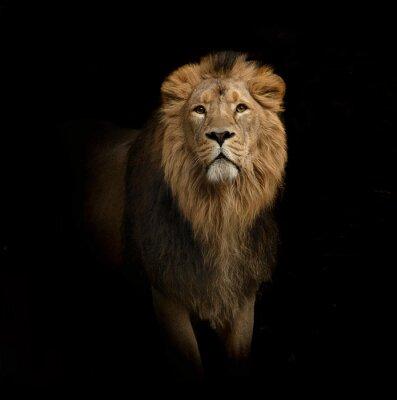 Image lion portrait on black