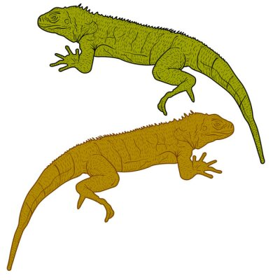 Image Lizard est silhouette goanna sur un fond blanc. Illustration vectorielle