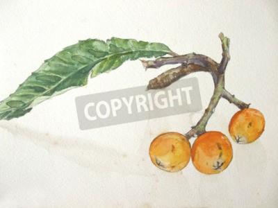 Image Loquat