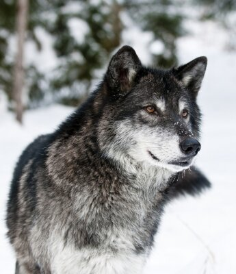 Image Loup