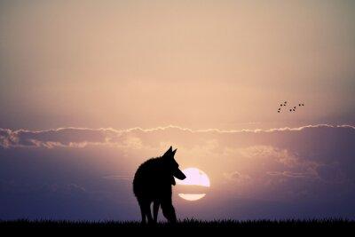 Image loup au coucher du soleil