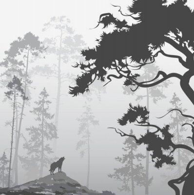 Image Loup dans la forêt