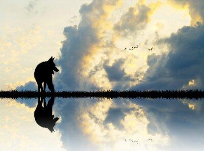 Image Loup, rivière, Coucher soleil