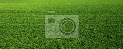 Image Lush green grass meadow background