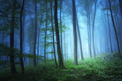 Image Magie lumière de couleur bleue dans forrest mystique