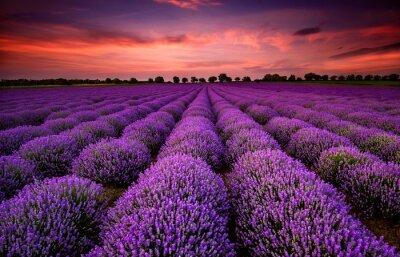 Image Magnifique paysage avec un champ de lavande au coucher du soleil
