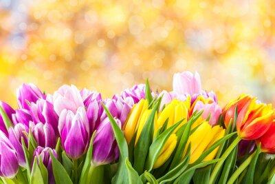 Image Magnifique tulipe fleurs