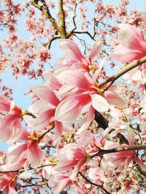 Image Magnolia, arbre, fleur