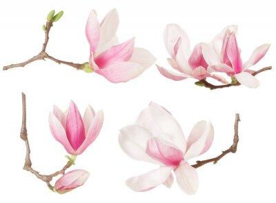 Image Magnolia fleur brindille collection de printemps sur fond blanc, chemin de détourage