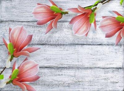 Image Magnolia, fleurs, fond, shabby, bois, planches