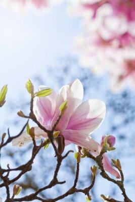 Image Magnolienblüte
