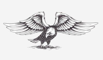Image Main détaillé établi Aigle. Vector.