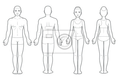 Image Male and female body chart