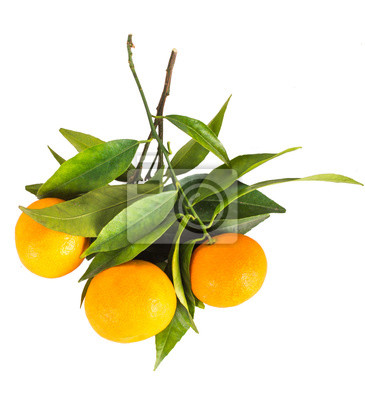 Mandarine, mandarine, agrumes, isolé, blanc, fond