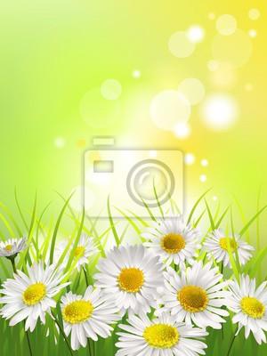 Image Marguerites blanches dans une prairie. Fond de printemps ou d'été.