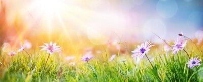 Image Marguerites sur le terrain - Paysage de printemps abstrait